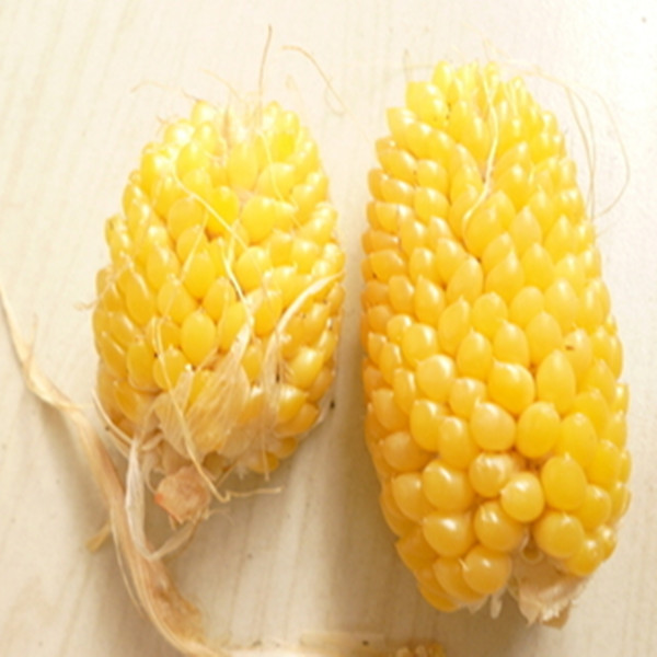 20x Fruit Corn seeds - Sweet Waxy red black white popcorn maize Non-GMO