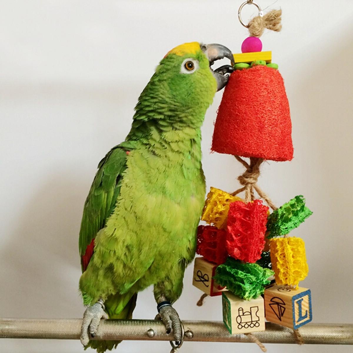 Pet Bird Toys : Pet bird parrot swing toys cage chew bite parakeet