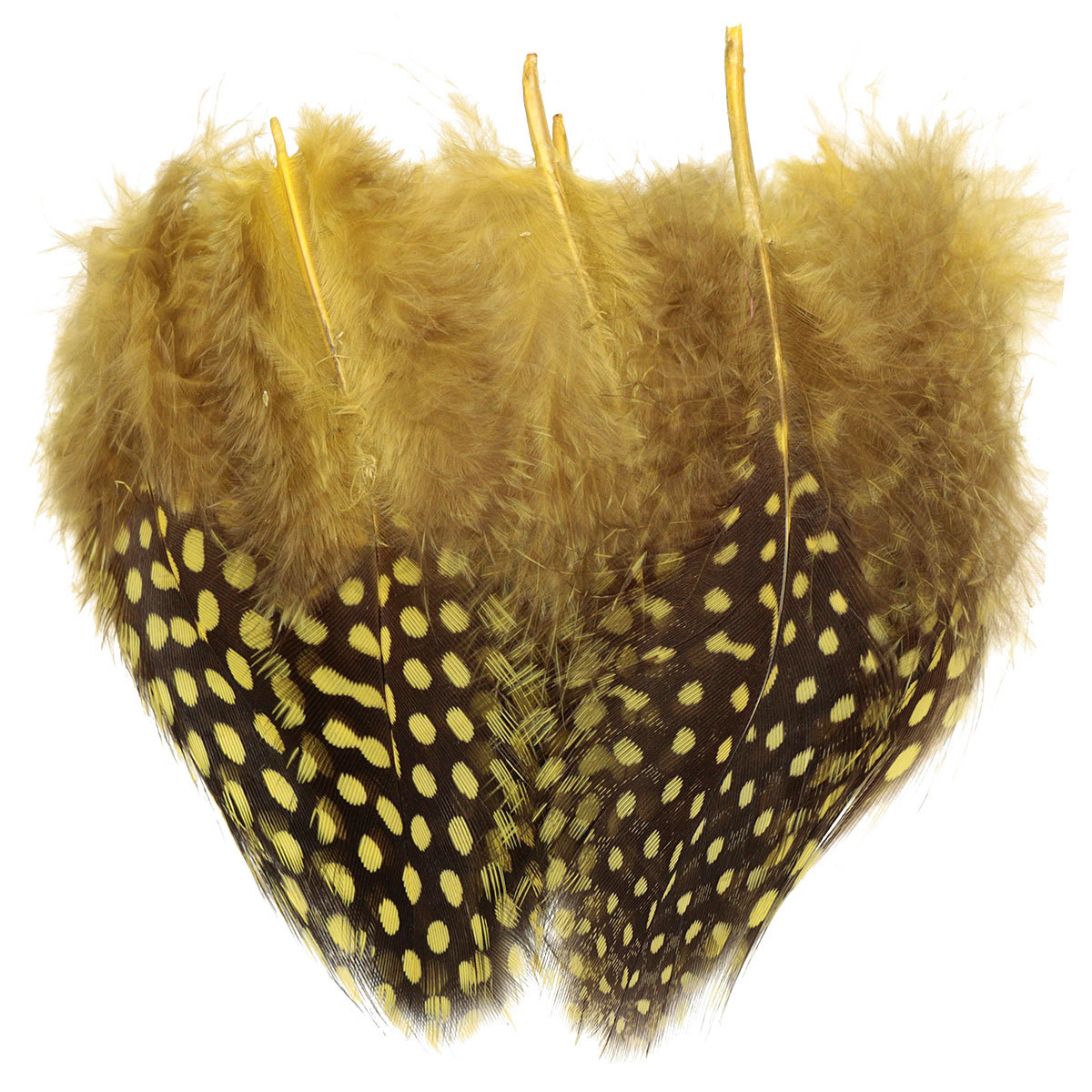 50pcs spotted natural pheasant hen feathers for diy craft for Natural feathers for crafts