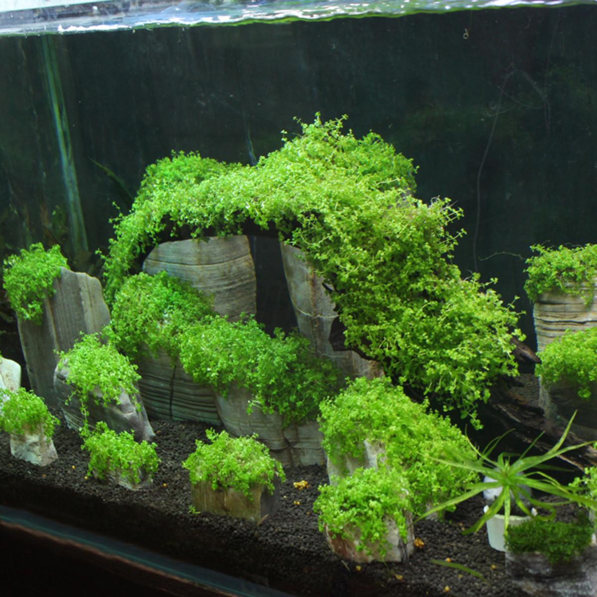 3pcs floating real rocks aquarium water plant fish tank for Landscaping rocks for aquarium