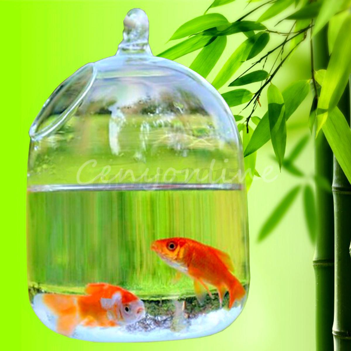 Hydroponic wall hanging bubble aquarium fish glass vase for Aquarium vase decoration