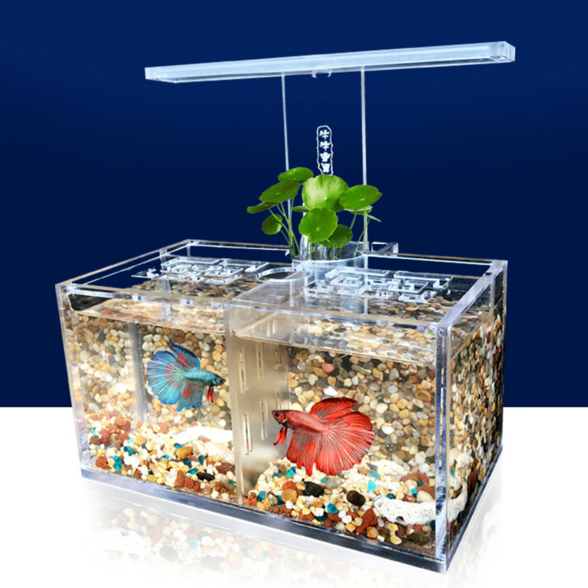 Acrylic clear betta fish tank mini desktop aquarium led for Betta fish tank with filter