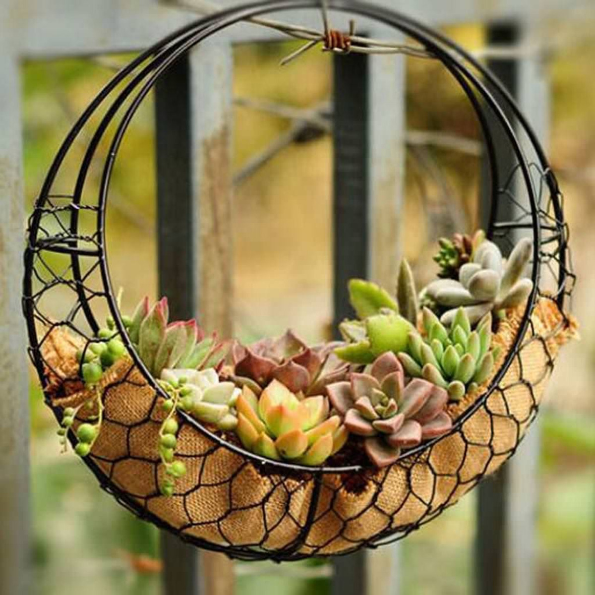 Hanging Flower Pot Iron Wall Succulent Planters Rustic Plant Holder ...