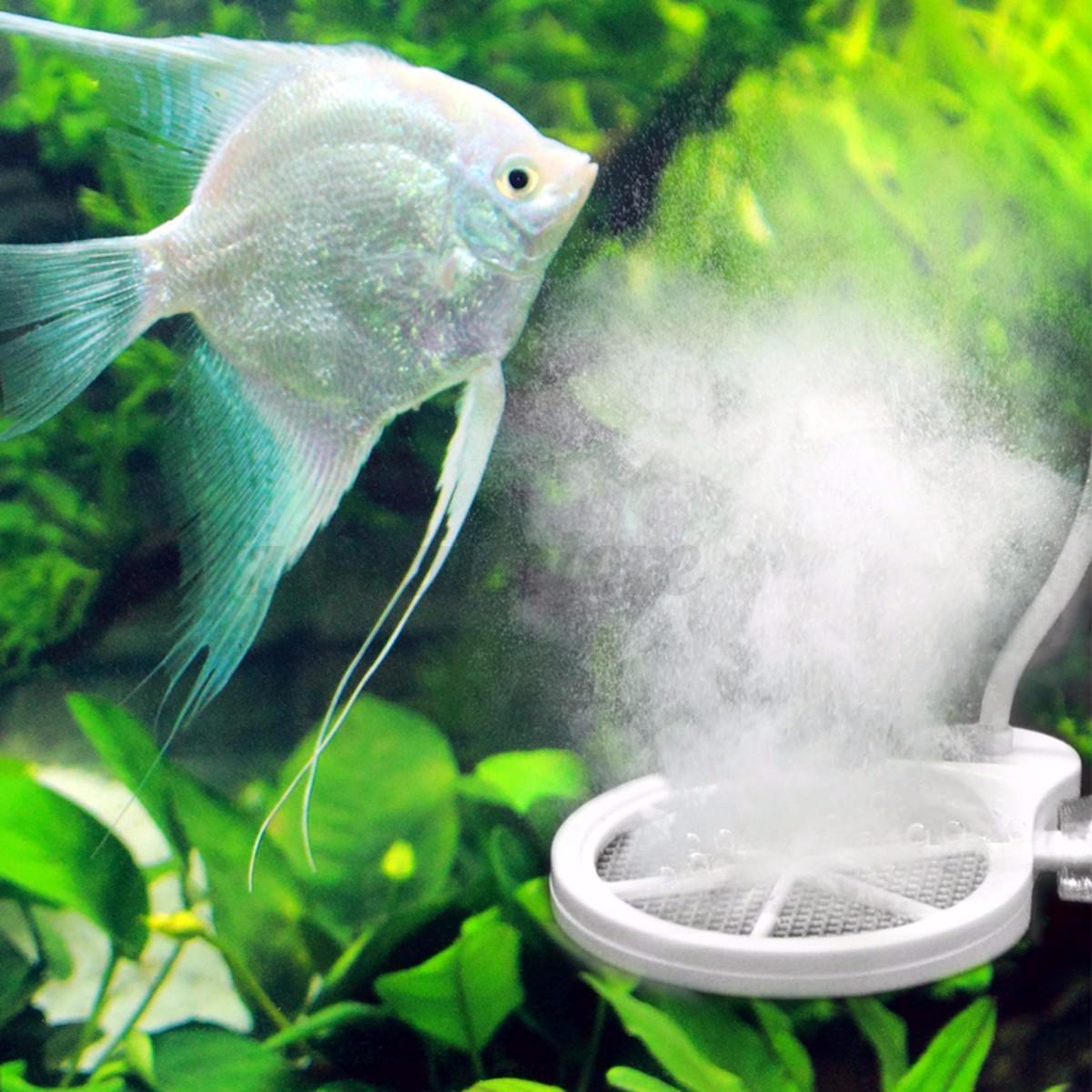 Aquarium no clean chihiros doctor inhibit algae sterilizer for How to clean algae from fish tank