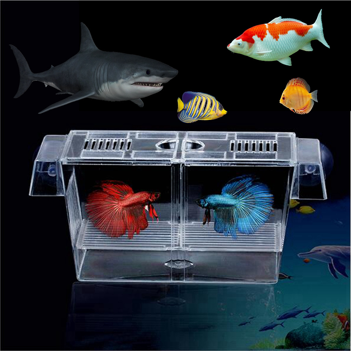 Aquarium fish tank breeding isolation guppy double rearing for Aquarium fish trap