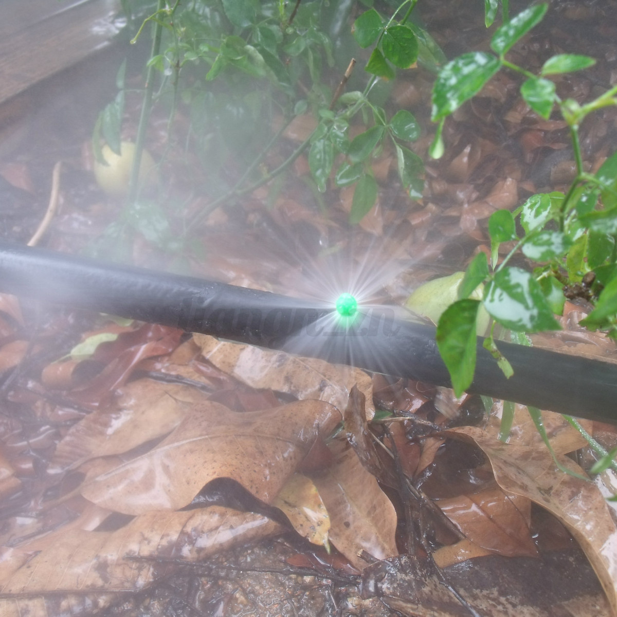 50pcs micro drip d 39 arrosage tuyau irrigation goutte goutte goutteurs jardin ebay. Black Bedroom Furniture Sets. Home Design Ideas